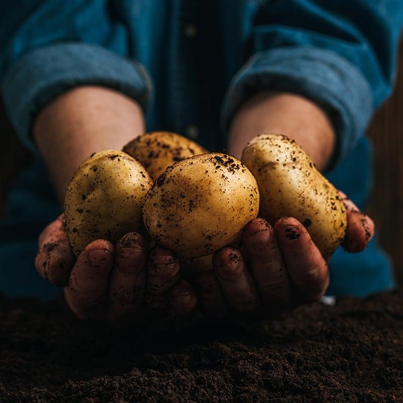 Hands_Potatoes_01