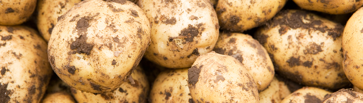 banner_unwashed_potatoes
