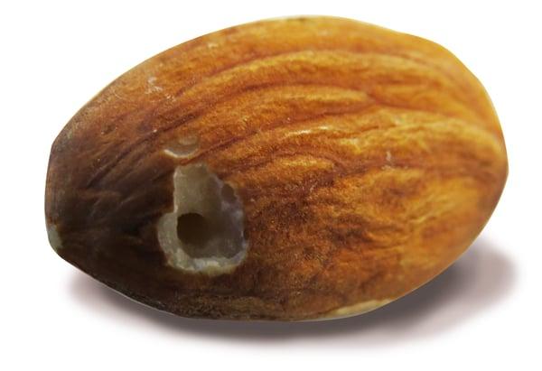 Almond pinhole detection