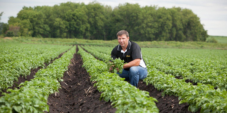 GUMZ Potato Field