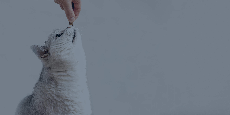 Extended-cat-left_overlay